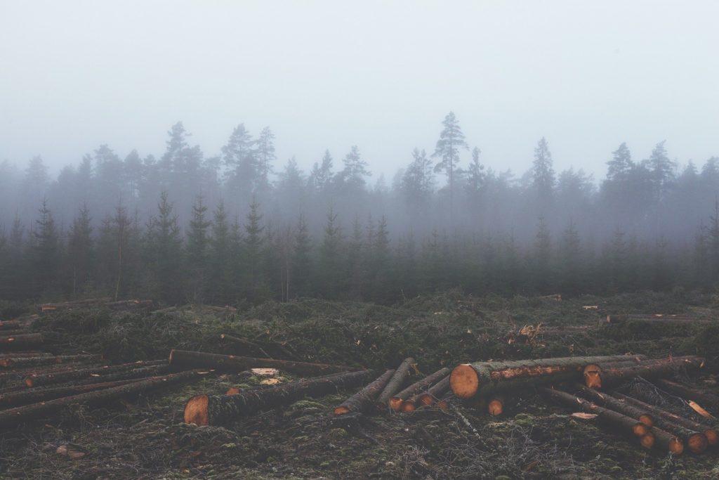 deforestation sanowave