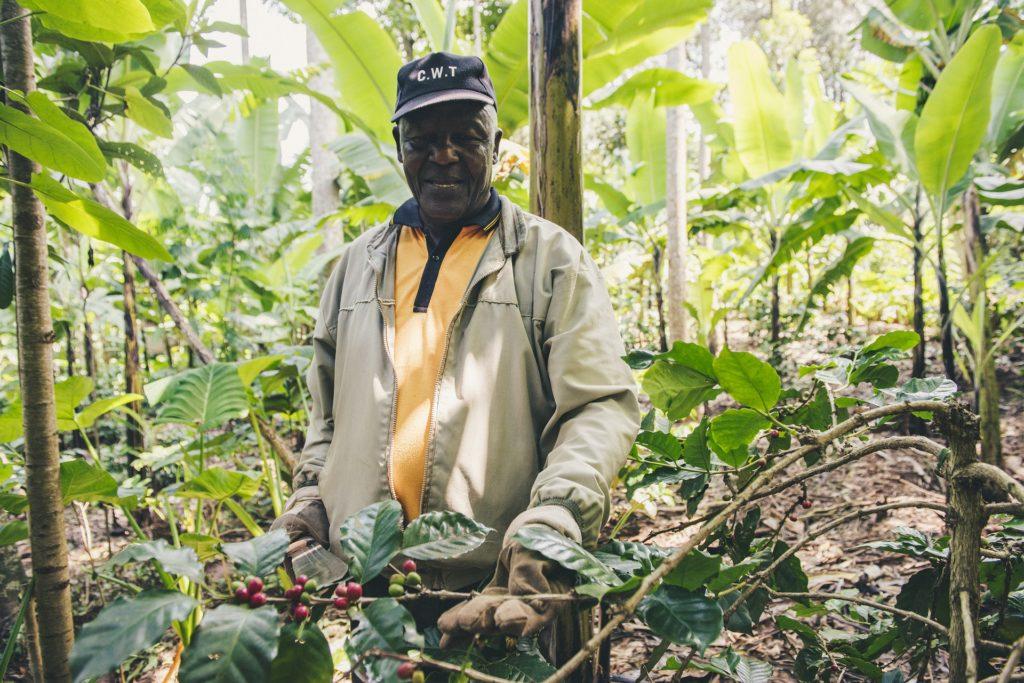 petit producteur café sanowave