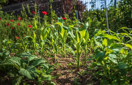 Agriculture urbaine l'avenir de l'alimentation des villes