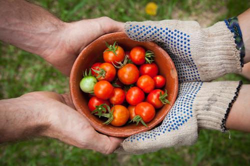 L'agriculture urbaine au secours de notre société